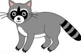 raccoon clipart clipart panda free clipart images rh clipartpanda com raccoon clip art pictures raccoon clipart images