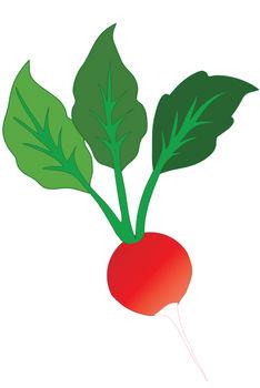radish clipart clipart panda free clipart images rh clipartpanda com radish plant clipart radish plant clipart