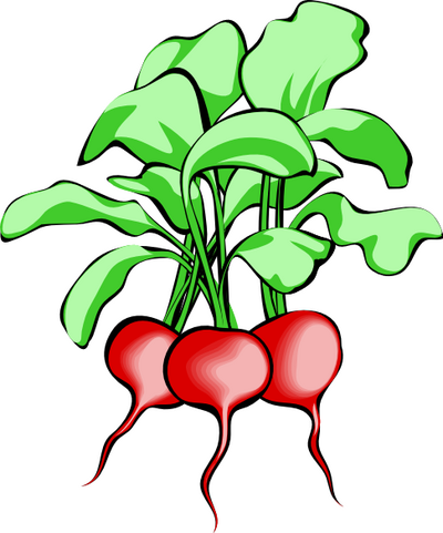 Radish Clipart | Clipart Panda - Free Clipart Images