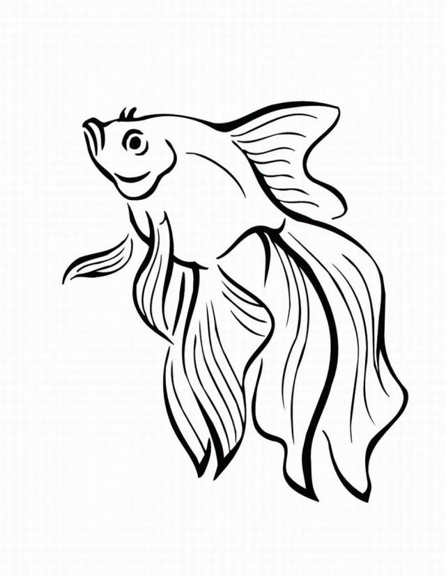 Rainbow fish coloring page clipart panda free clipart for Rainbow fish coloring pages