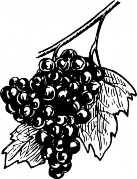 raisin%20clipart