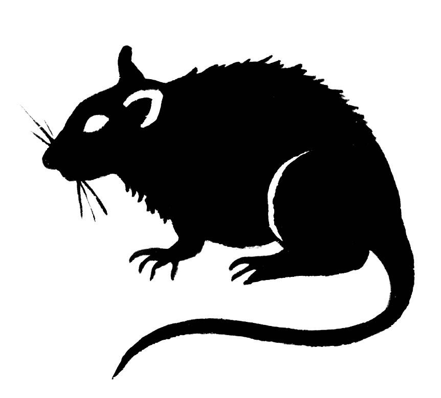 Line Art Rat : Rat clipart black and white panda free