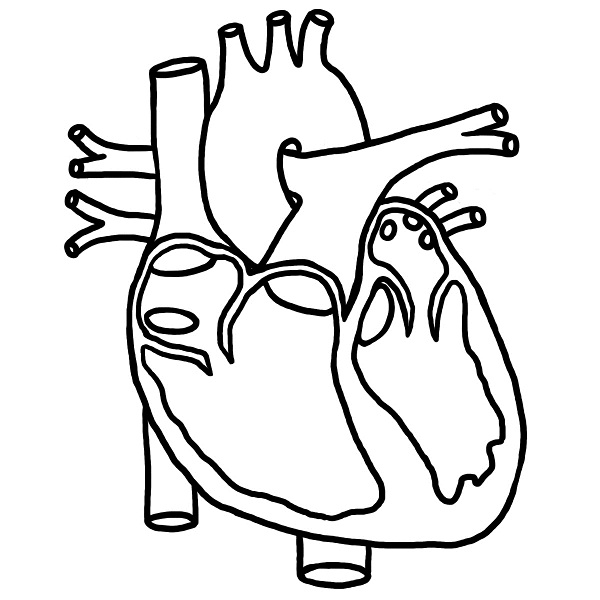 heart diagram coloring page