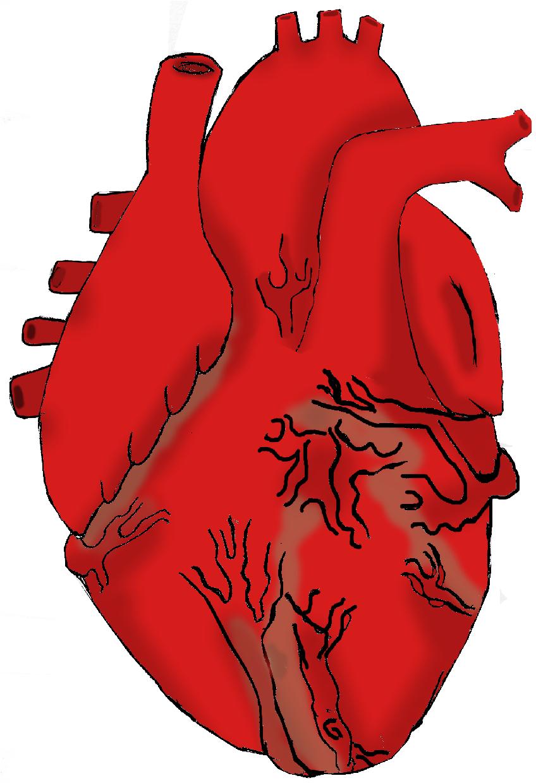 Real Heart Drawing Real Heart Drawing | C...