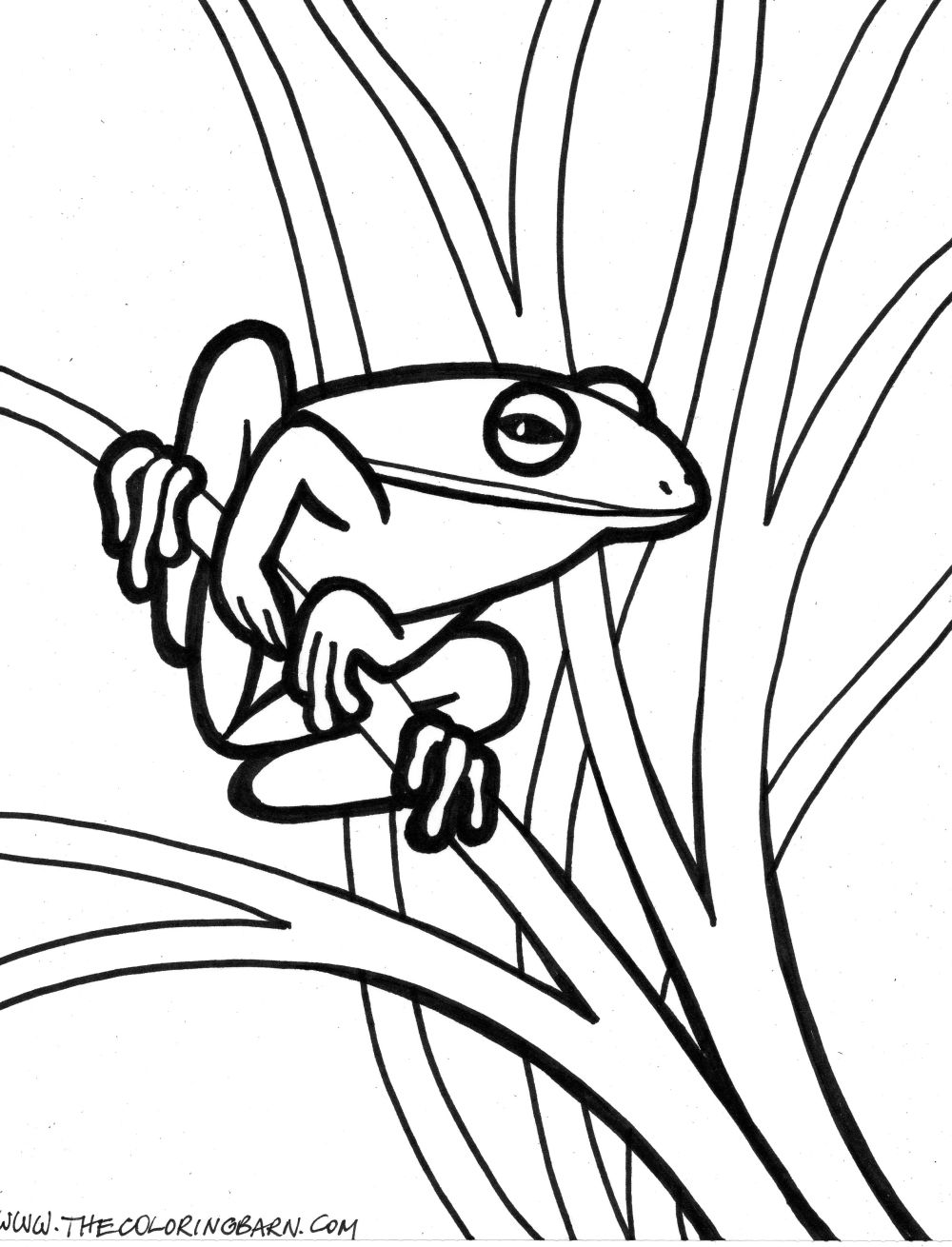Free coloring pages red eyed tree frog - Realistic 20frog 20coloring 20pages