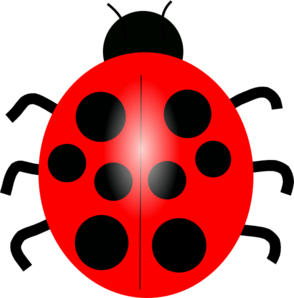 Realistic Ladybug Drawing | Clipart Panda - Free Clipart Images