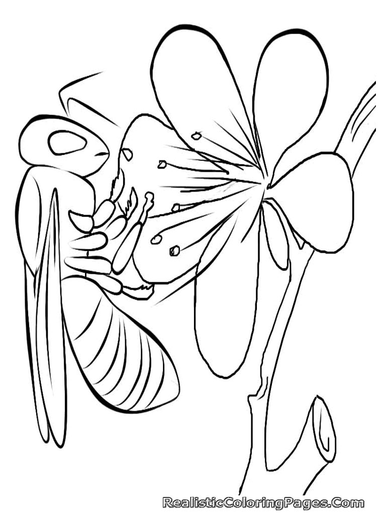 Realistic Peacock Coloring Pages | Clipart Panda - Free ...