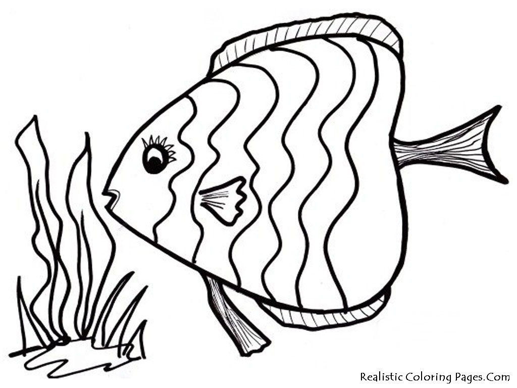 Realistic Tropical Fish Coloring Pages Clipart Panda