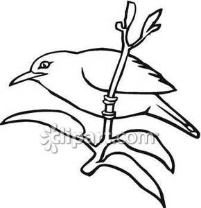 recess-clipart-black-and-white-Black_and_White_Mynah_Bird_Royalty_Free ... Quail Black And White Clipart
