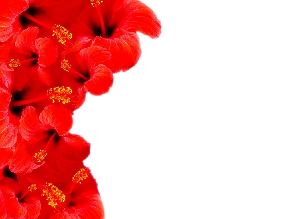 Red Flower Border Clip Art | Clipart Panda - Free Clipart ...