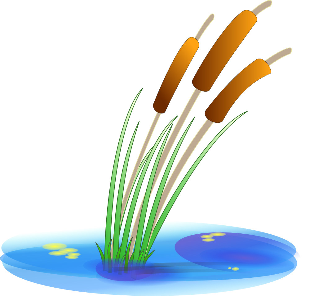 Displaying 20> Images For - Cattails Black And White Clipart...