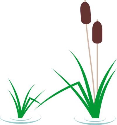 Go Back > Gallery For > Cattails In Pond Clipart