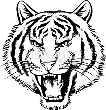 Tiger Head Growling Drawing