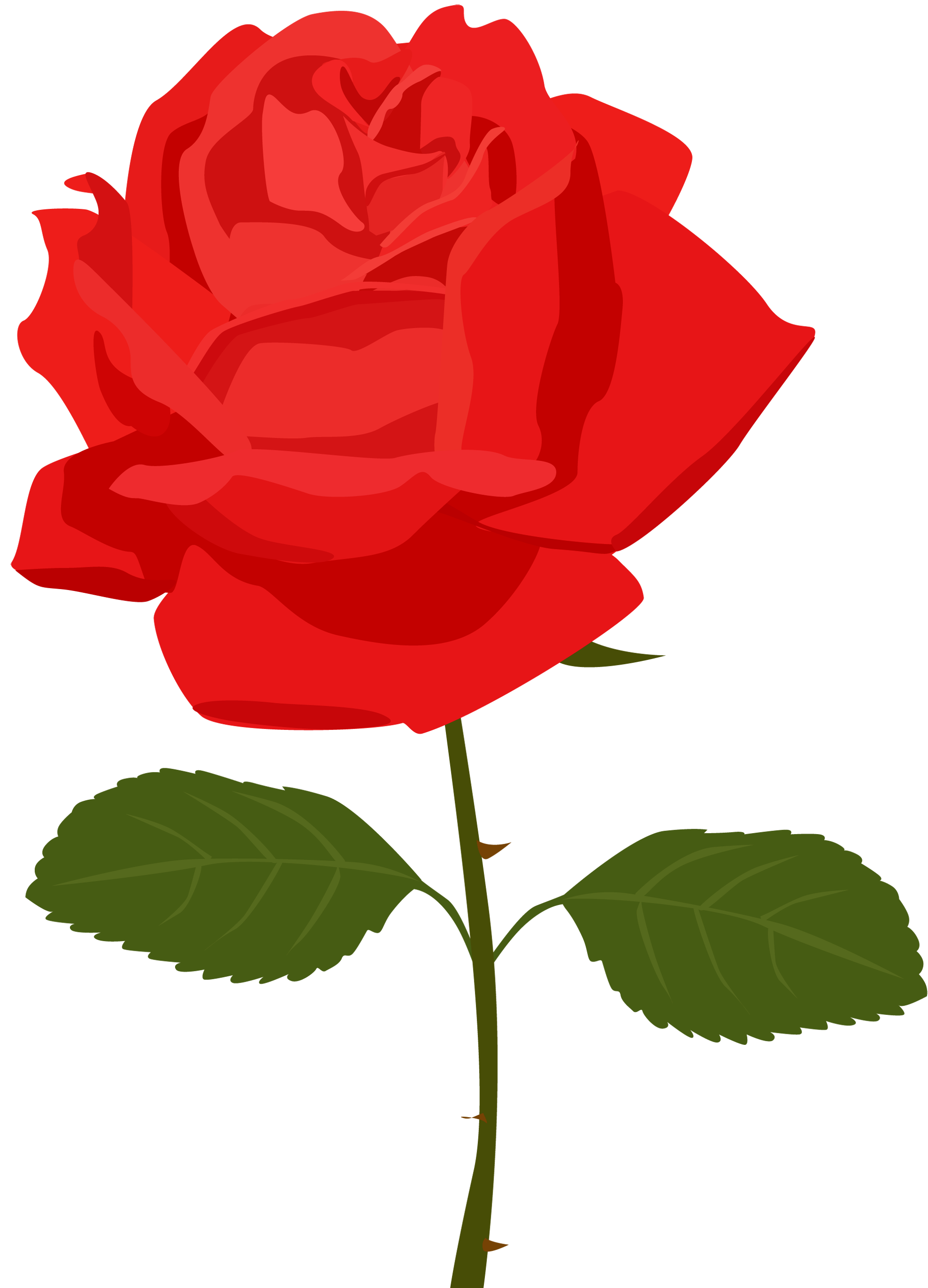 rose border clip art png clipart panda free clipart images rh clipartpanda com clipart rose colored flowers clip art roses images