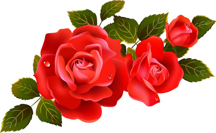 Single Rose Clipart: Clipart Panda - Free Clipart Images