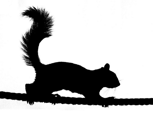 Running Squirrel Silhouette | Clipart Panda - Free Clipart Images