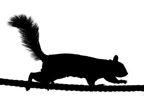 running%20squirrel%20silhouette