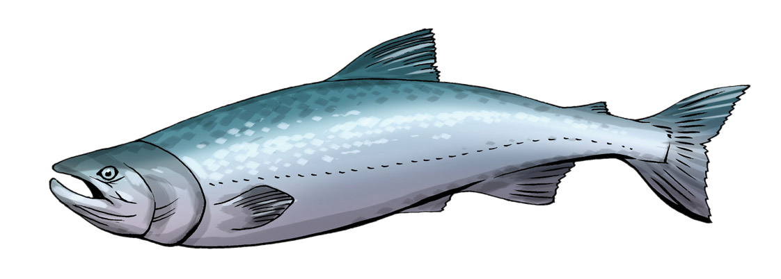 Salmon clipart clipart panda free clipart images for Salmon fish images