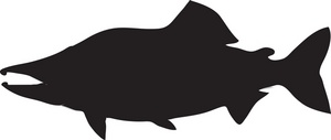 salmon%20clipart