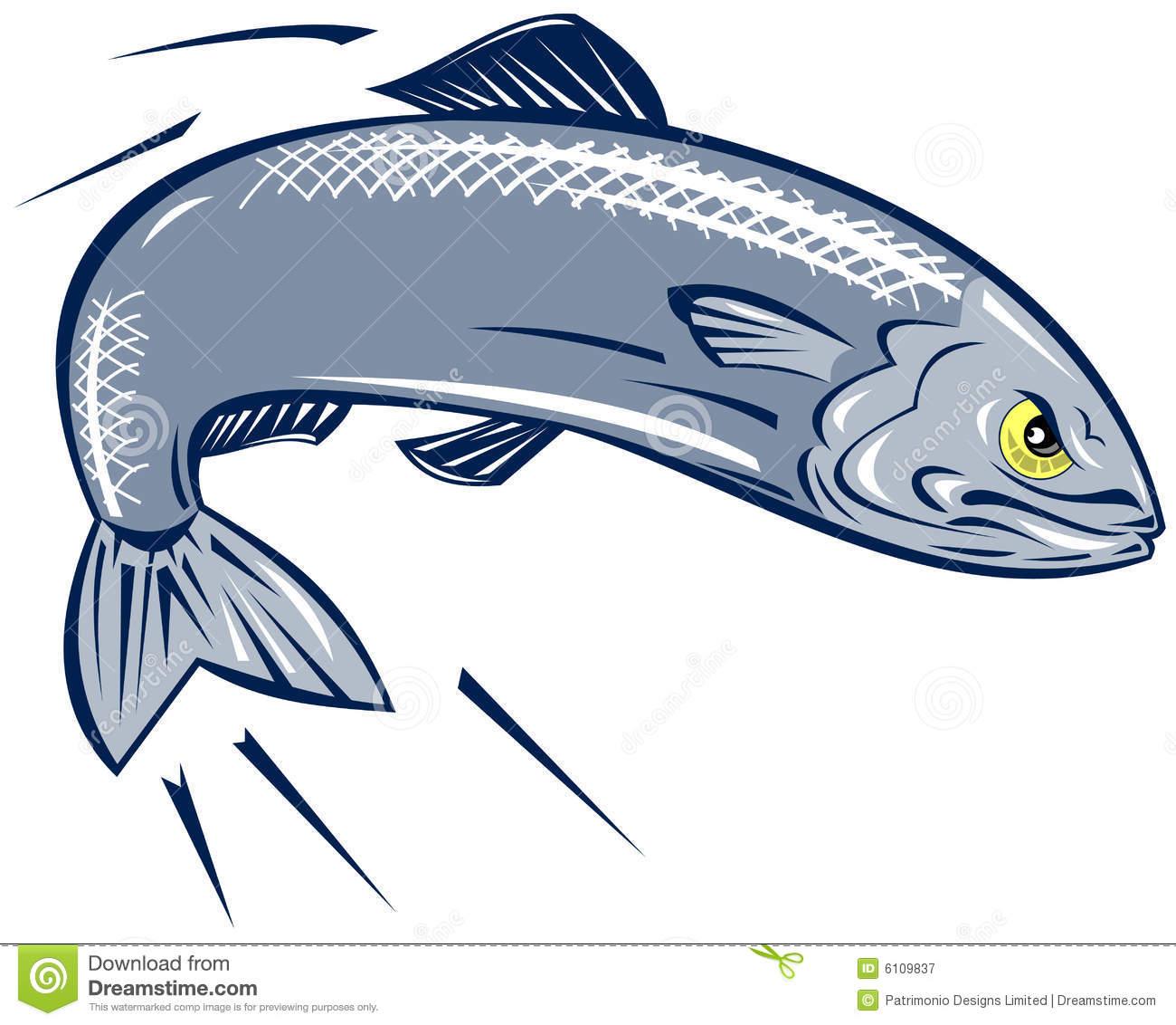 Sardine fish vector