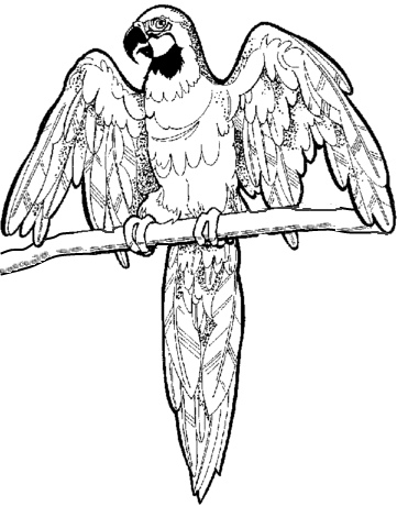 spur winged plover coloring page spur winged plover coloring page cute fish coloring