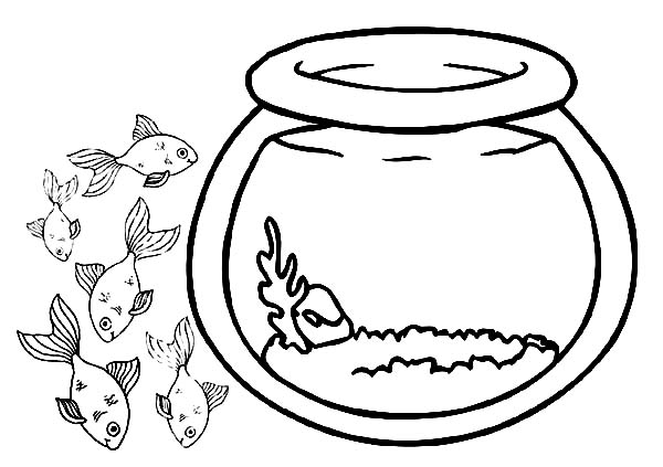School Of Fish Coloring Page