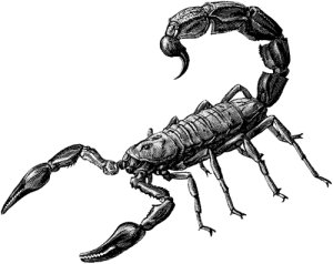 A primeira caçada Scorpion-clipart-scorp2