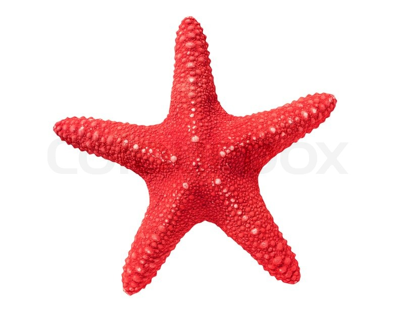 Seastar Silhouette | Clipart Panda - Free Clipart Images