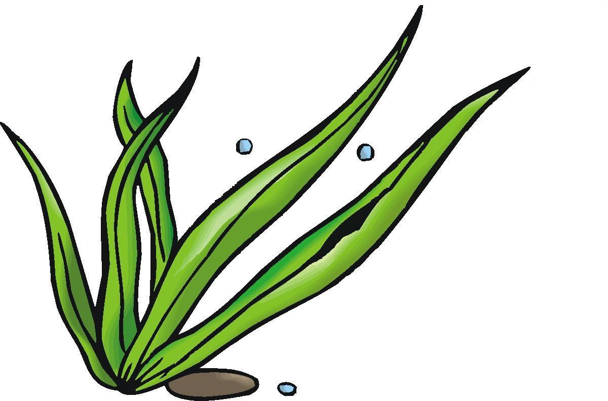 Line Drawing Kelp : Seaweed clipart panda free images