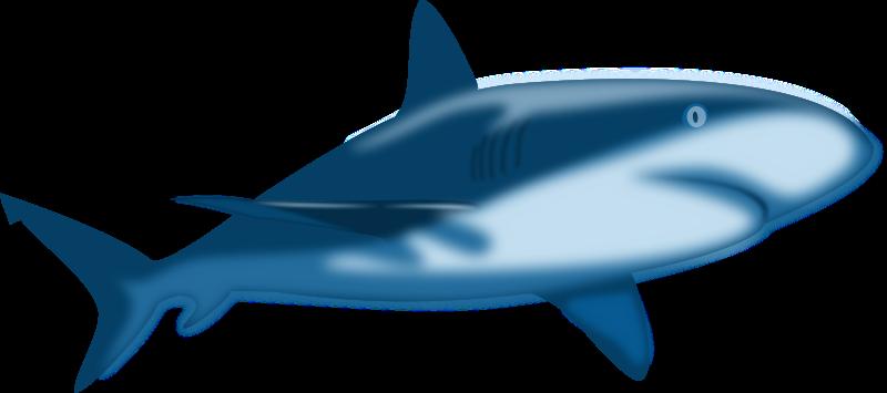 shark clip art images clipart panda free clipart images rh clipartpanda com shark clip art free images shark clip art free svg
