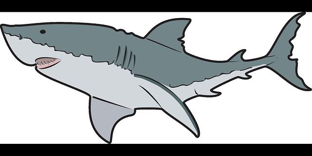 great white shark clip art clipart panda free clipart images rh clipartpanda com great white shark clip art free great white shark clipart free