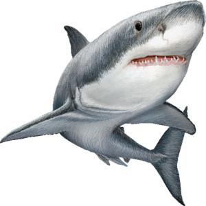 Shark Clip Art Cartoon | Clipart Panda - Free Clipart Images