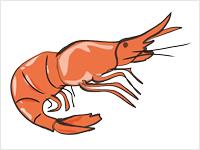 cooked shrimp clipart clipart panda free clipart images rh clipartpanda com shrimp clip art border shrimp clip art border