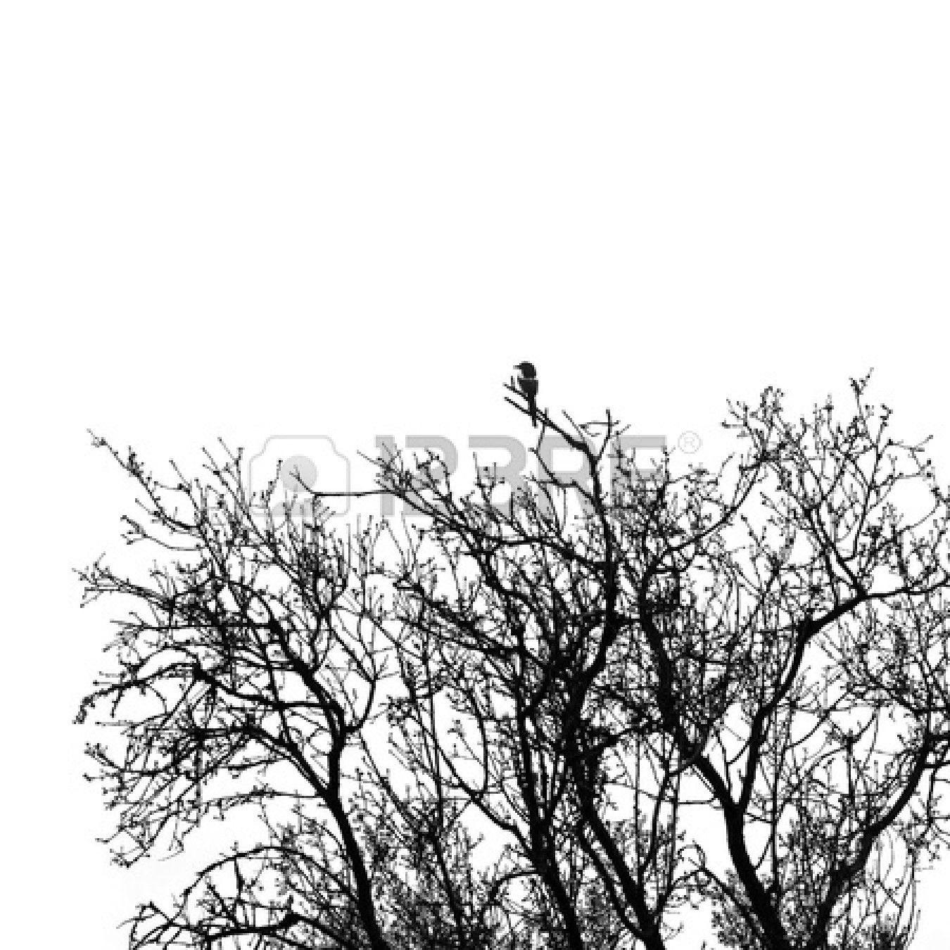 Simple Black And White Tree Branches | Clipart Panda ...