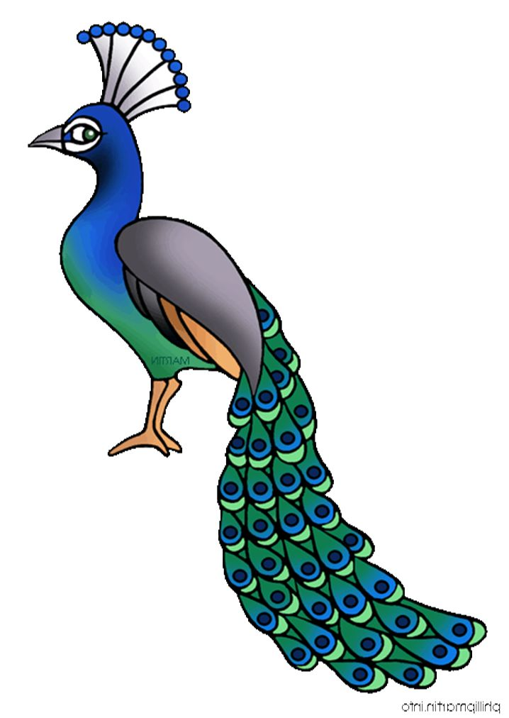 Simple peacock drawings - photo#12