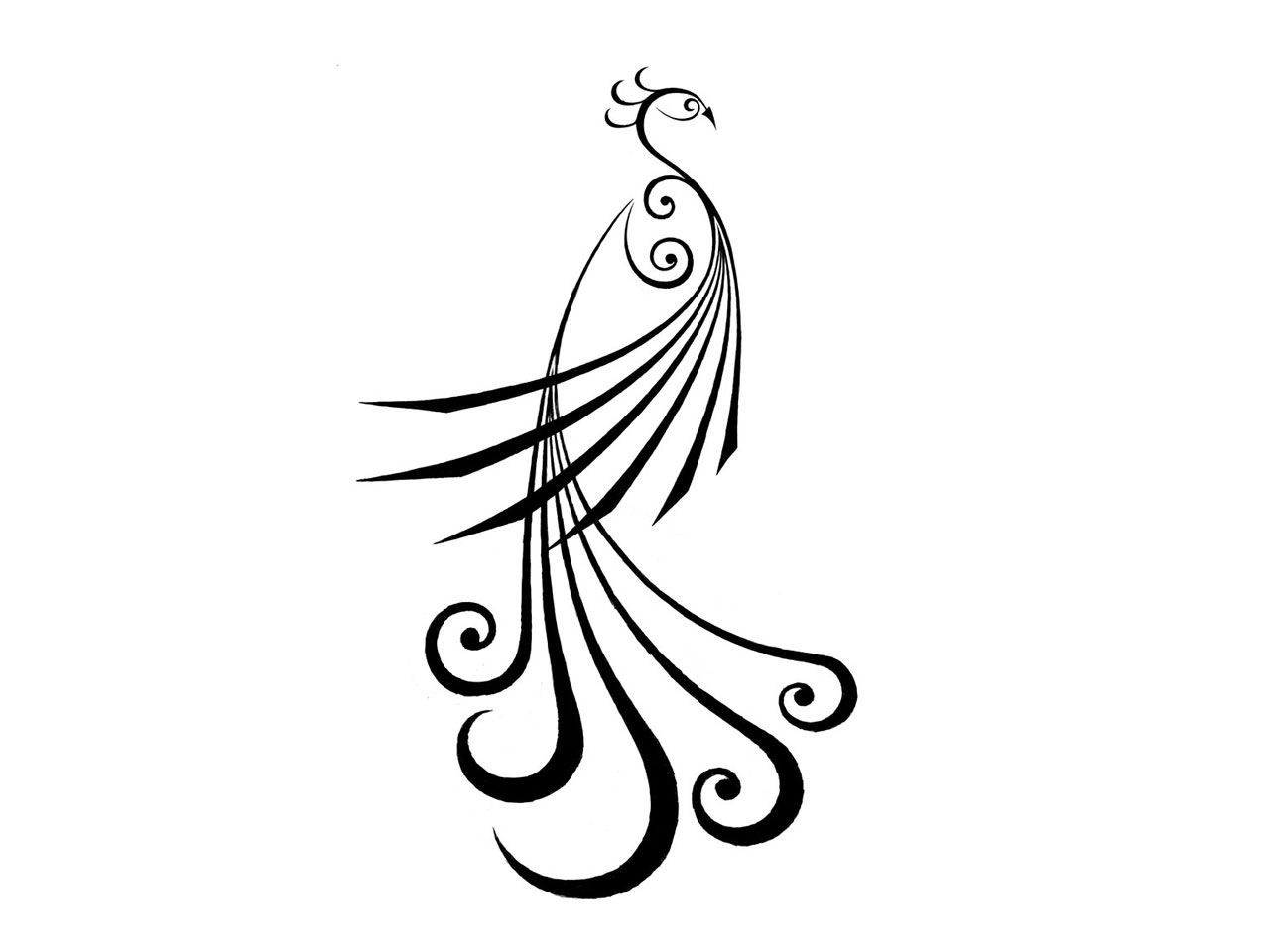 Simple Line Drawing Clip Art : Simple peacock feather design clipart panda free