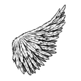 nice free vector wings on clipart panda free clipart images rh clipartpanda com free pilot wings vector free vector wings illustrator