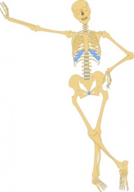 Skeleton Clip Art
