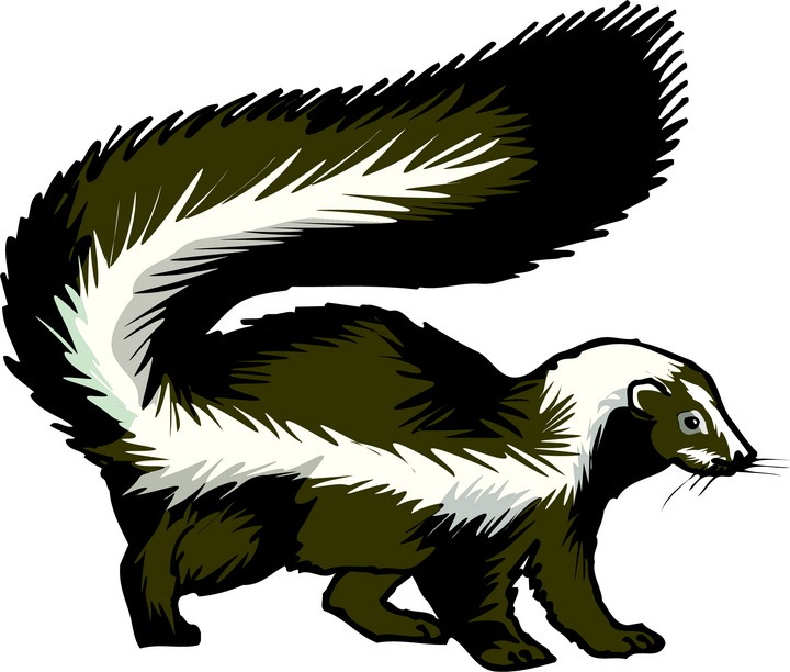 skunk clipart clipart panda free clipart images skunk clip art black white skunk clip art black white