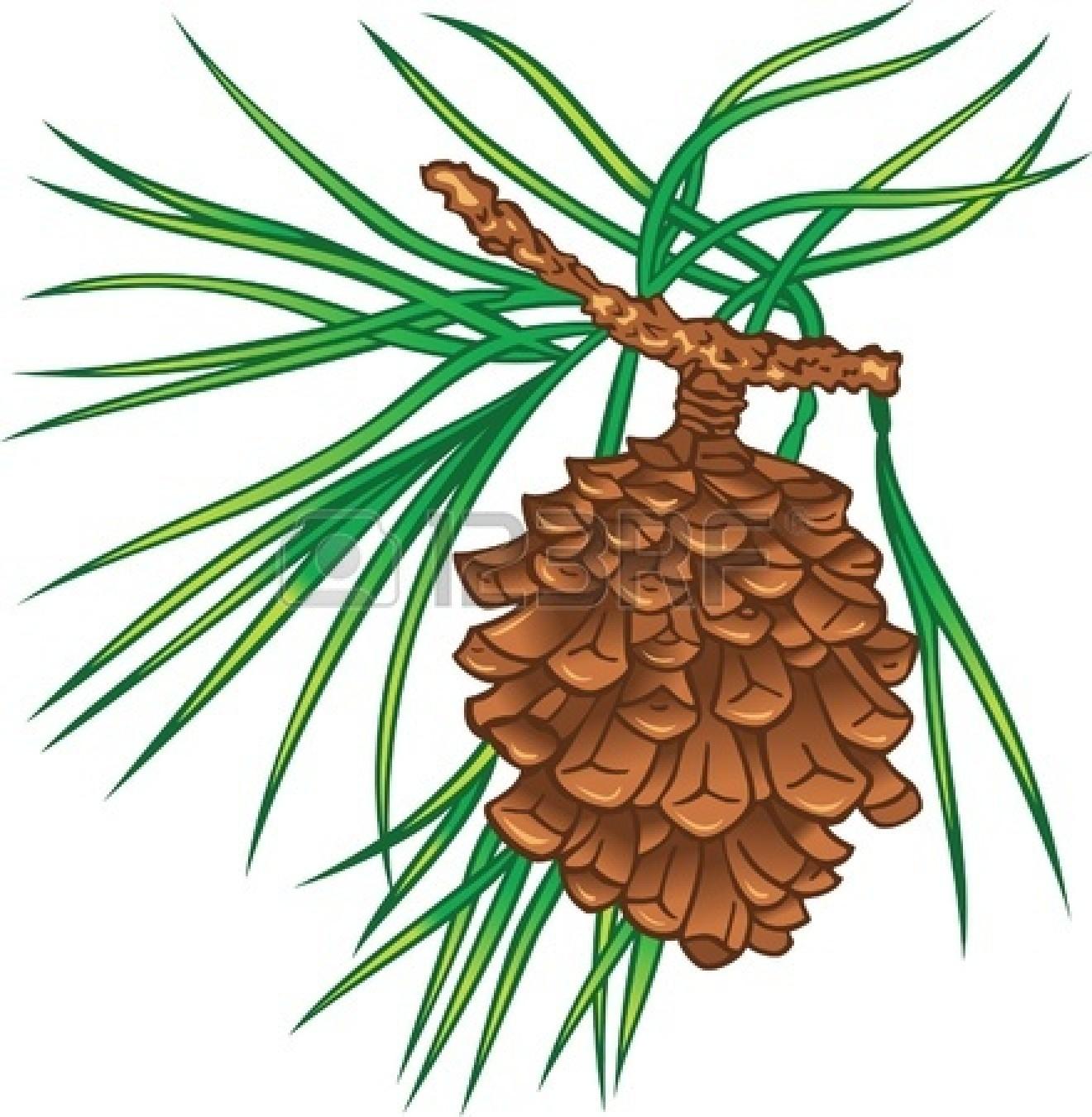 clip art pine cone clipart panda free clipart images rh clipartpanda com pine cone border clip art pine cone clip art free
