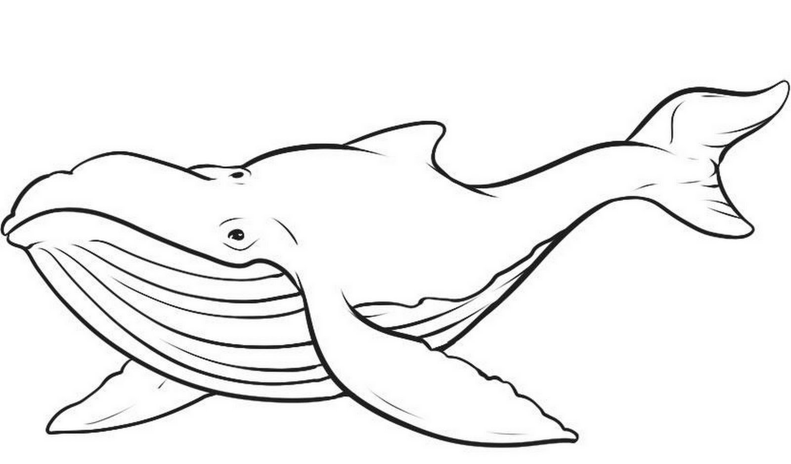 Humpback whale clipart - photo#16