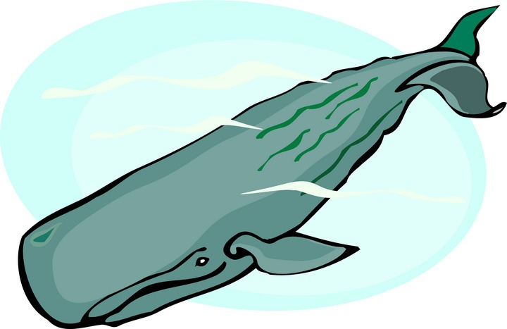 She put sperm whale cartoon