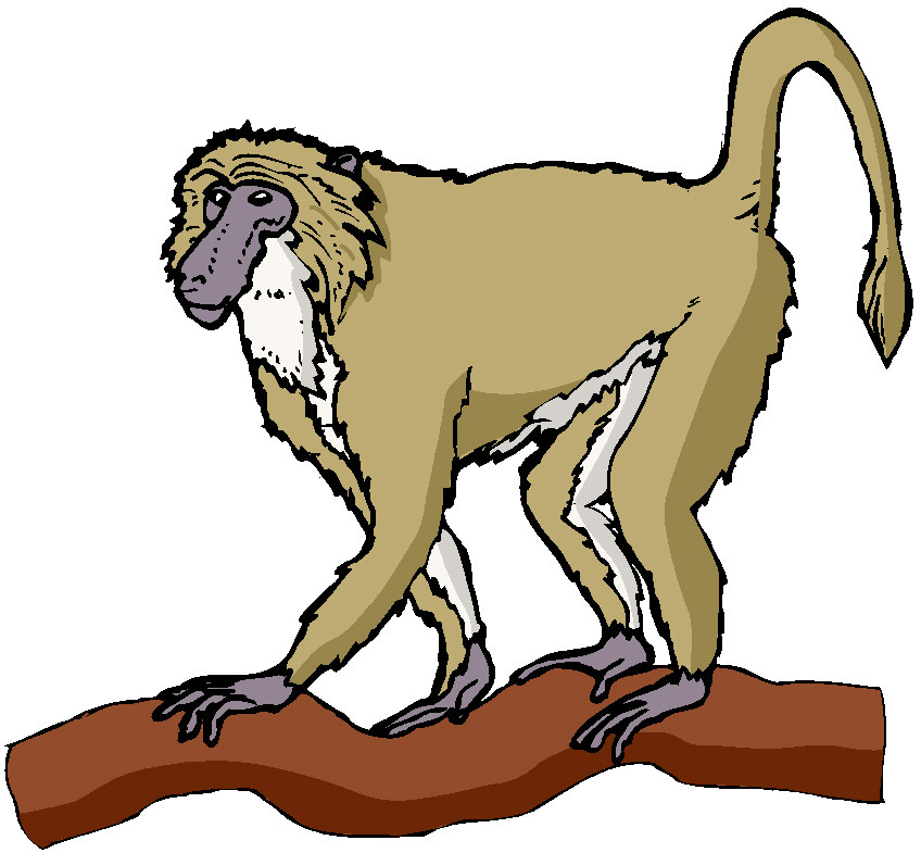 spider-monkey-clip-art-clip-art-monkeys-494107.jpg