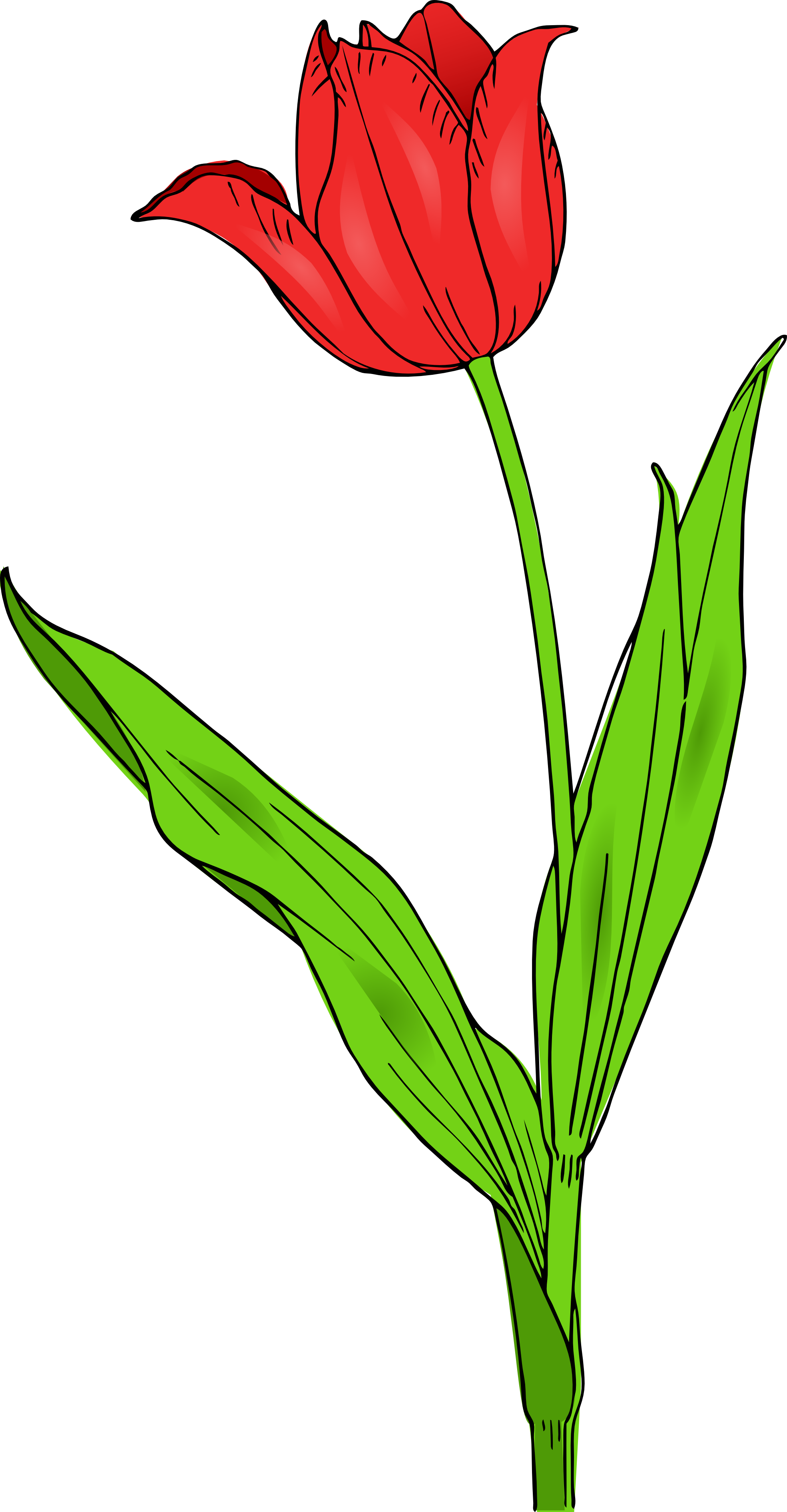 colored tulip spring svg clipart panda free clipart images rh clipartpanda com