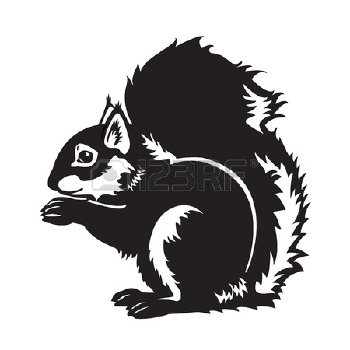 squirrel%20black%20and%20white