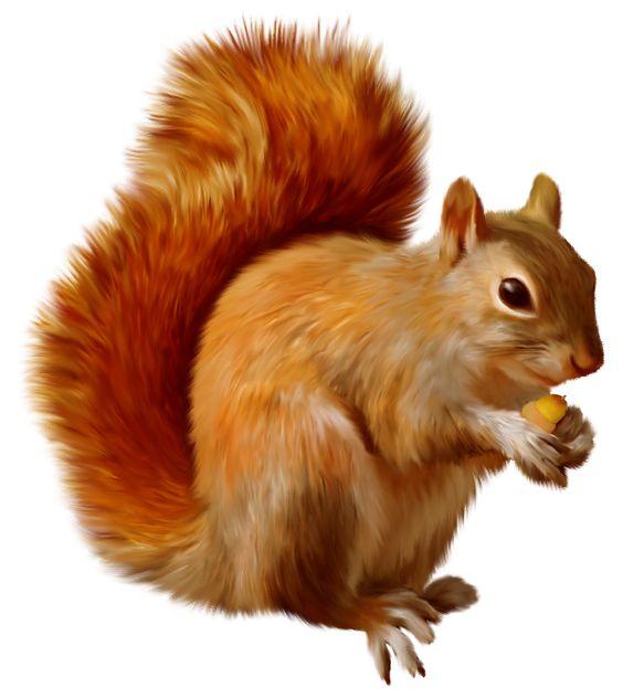 squirrel clipart clipart panda free clipart images rh clipartpanda com Squirrel Outline Clip Art squirrel images clipart