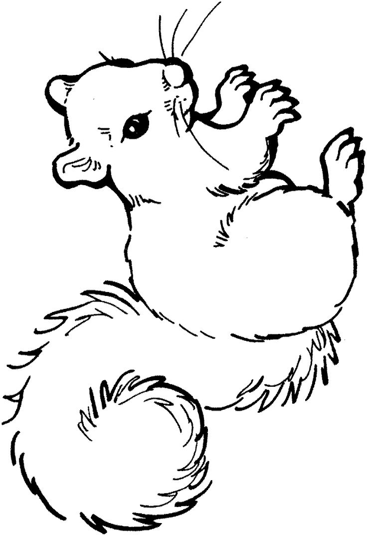Squirrel coloring page clipart panda free clipart images for Printable coloring pages of squirrels