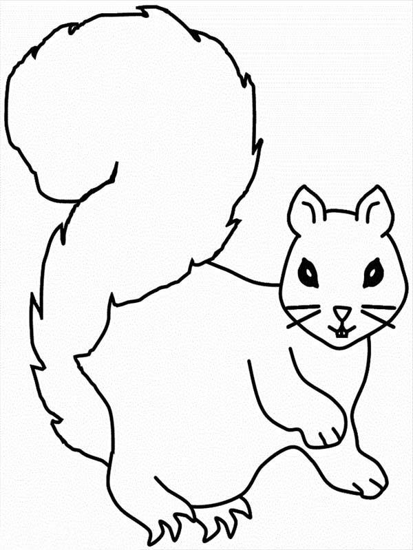 squirrel acorn coloring page squirrel20with20acorn20coloring20page squirrel20with20acorn20coloring20page squirrel20with20acorn20coloring20page