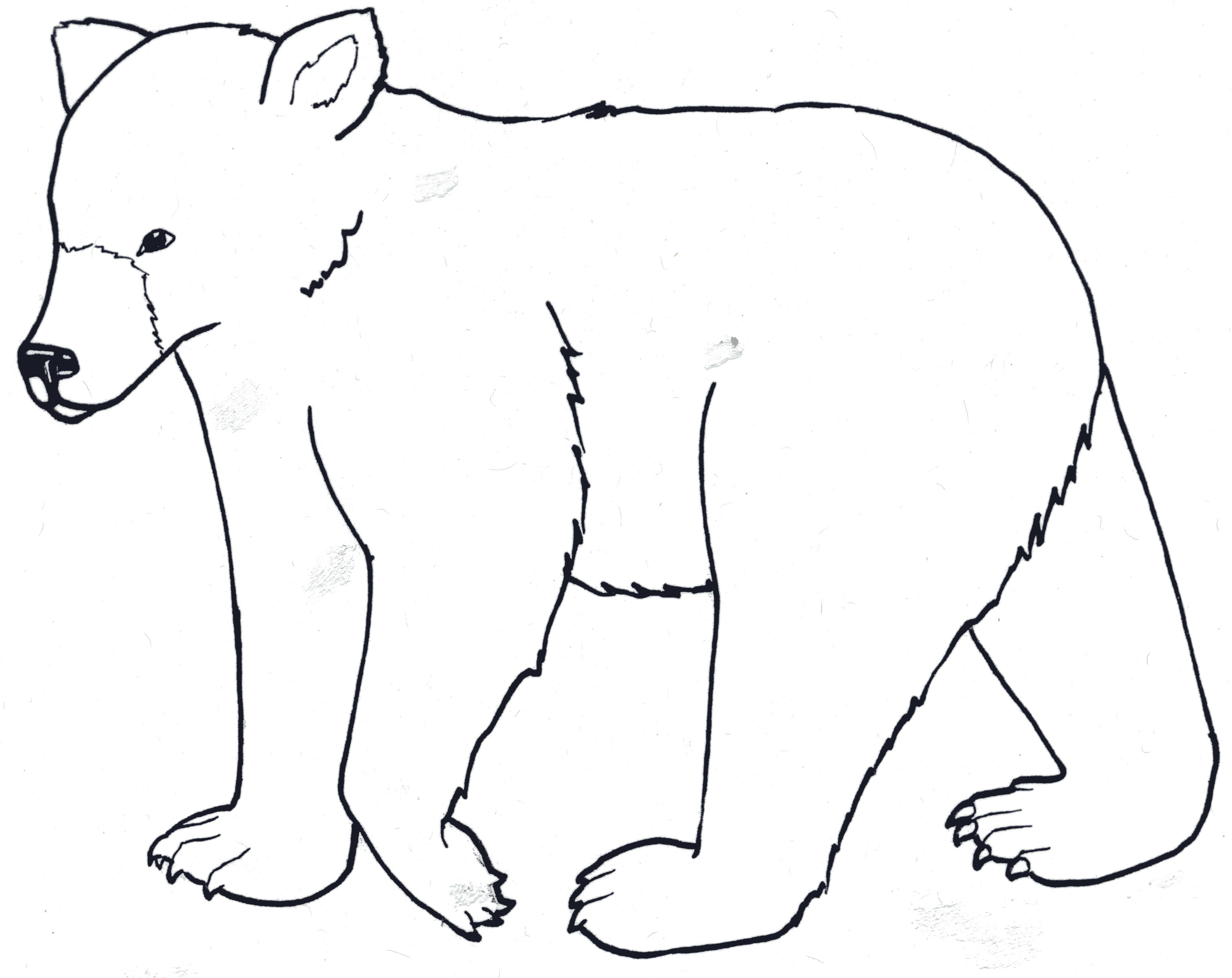 Black Bear Drawing Outline