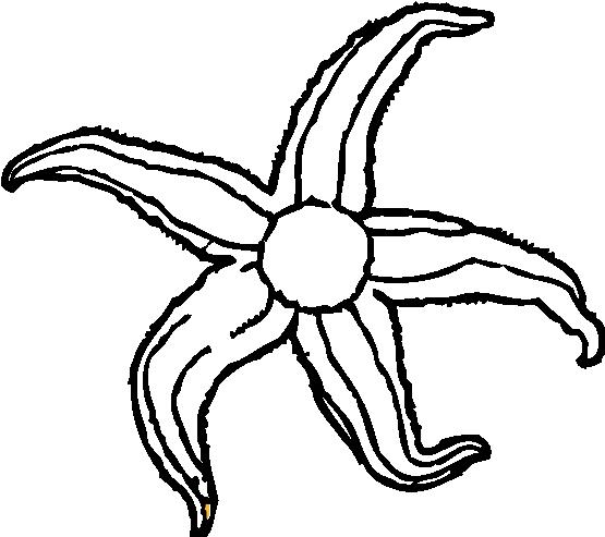 starfish%20clip%20art%20black%20and%20white